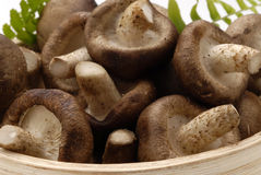 Cogumelos de Shiitake. imagens de stock