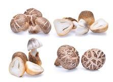 Cogumelos de Shiitake e cogumelos de palha isolados no branco Foto de Stock Royalty Free