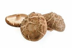 Cogumelos de Shiitake no branco Imagem de Stock