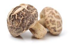 Cogumelos de shiitake secados Fotos de Stock