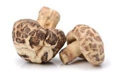 Cogumelos de shiitake secados Foto de Stock