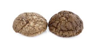 Cogumelos de shiitake secados, cogumelos chineses no fundo branco imagem de stock royalty free
