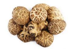 Cogumelos de shiitake secados no branco Fotografia de Stock Royalty Free