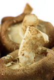 Cogumelos de Shiitaki Imagens de Stock Royalty Free