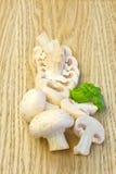 Cogumelos de tecla frescos Foto de Stock