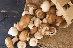 Cogumelos derramados da cesta Cogumelos brancos e marrons Imagem de Stock