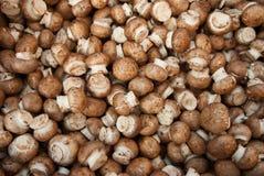 Cogumelos diminutos orgânicos do shitaki Imagens de Stock Royalty Free