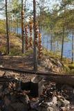 Cogumelos do acampamento Imagens de Stock