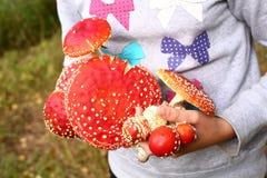 Cogumelos do agaric de mosca nas mãos Imagem de Stock Royalty Free