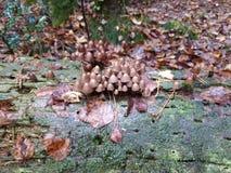 Cogumelos do arranha-céus imagem de stock royalty free