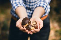Cogumelos do Bolete da baía Imagens de Stock Royalty Free