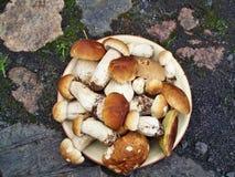 Cogumelos do cepa-de-bordéus Fotos de Stock