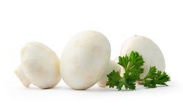 Cogumelos do cogumelo Fotografia de Stock
