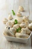 Cogumelos do cogumelo Imagem de Stock Royalty Free