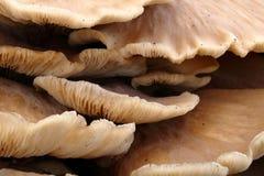 Cogumelos do coto de árvore Imagens de Stock