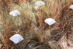 Cogumelos do desenhista na grama amarela, exterior moderno do jardim imagens de stock royalty free