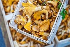 Cogumelos do mercado Imagens de Stock