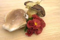 Cogumelos do outono na floresta perto de Kiev Foto de Stock