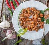 Cogumelos do tampão do leite do aç6frão Fotografia de Stock Royalty Free