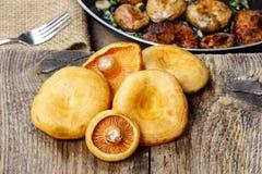 Cogumelos do tampão do leite do açafrão na tabela de madeira Fotografia de Stock Royalty Free