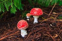 Cogumelos do Toadstool Imagem de Stock Royalty Free