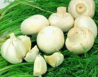 Cogumelos e alho brancos sobre sprigs do aneto. Imagens de Stock Royalty Free