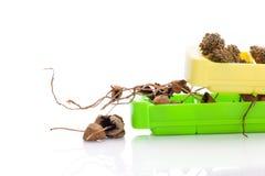 Cogumelos e marijuana psicadélicos secados Imagem de Stock