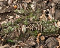 Cogumelos e musgo Imagem de Stock Royalty Free