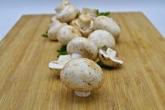 Cogumelos e salsa frescos comestíveis da cultura imagens de stock