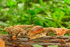 Cogumelos e shell amarelos Foto de Stock Royalty Free