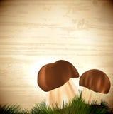 Cogumelos edulis do boleto Fotos de Stock