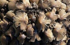 Cogumelos em cotoes velhos imagem de stock