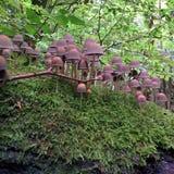 Cogumelos em Kordel Fotos de Stock Royalty Free