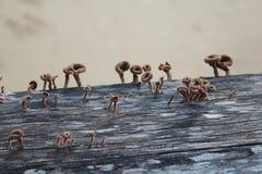 Cogumelos em um cais de madeira Imagem de Stock Royalty Free