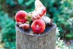 Cogumelos em um coto Imagem de Stock Royalty Free