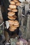 Cogumelos em um coto imagens de stock