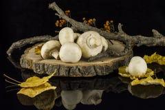 Cogumelos em um coto de árvore Imagens de Stock Royalty Free
