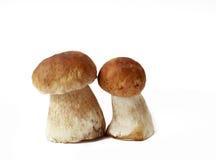 Cogumelos em um fundo isolado Imagens de Stock Royalty Free