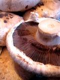 cogumelos em um mercado Foto de Stock