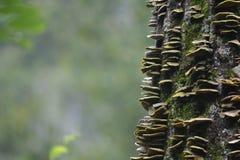 Cogumelos em uma árvore Imagens de Stock Royalty Free