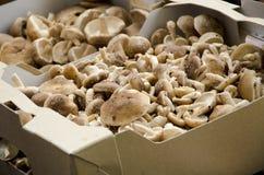 Cogumelos em uma caixa marrom Imagens de Stock
