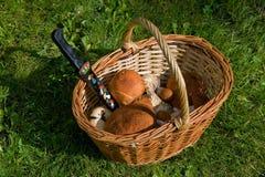 Cogumelos em uma cesta Fotos de Stock Royalty Free