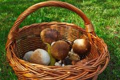 Cogumelos em uma cesta Imagem de Stock