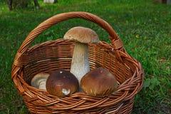 Cogumelos em uma cesta Fotos de Stock