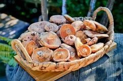 Cogumelos em uma cesta Fotografia de Stock Royalty Free