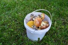Cogumelos em uma cubeta Imagens de Stock Royalty Free
