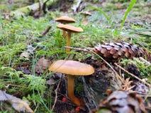 Cogumelos em uma linha Foto de Stock Royalty Free