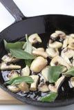 Cogumelos fazendo saltar com sábio fotografia de stock