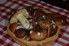 Cogumelos frescos Imagem de Stock