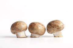Cogumelos frescos da castanha Foto de Stock Royalty Free